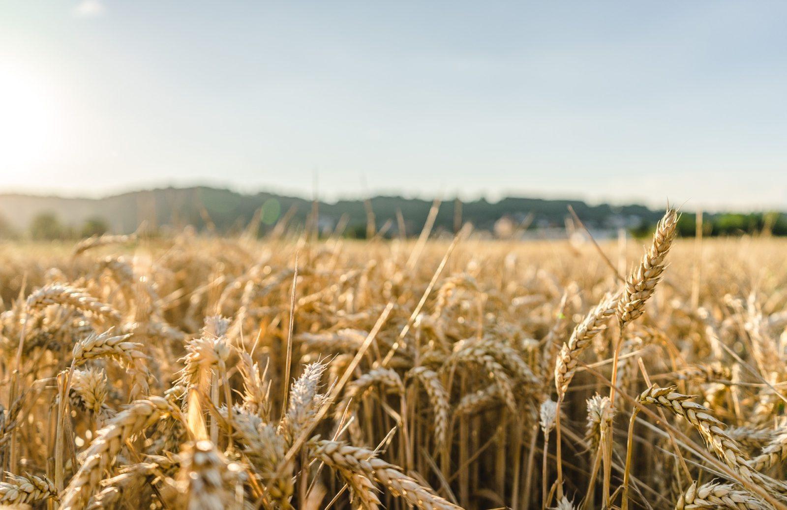 Agronomia Integral